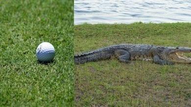 coccodrillo pallina golf