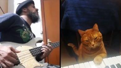 gatto suona pianoforte