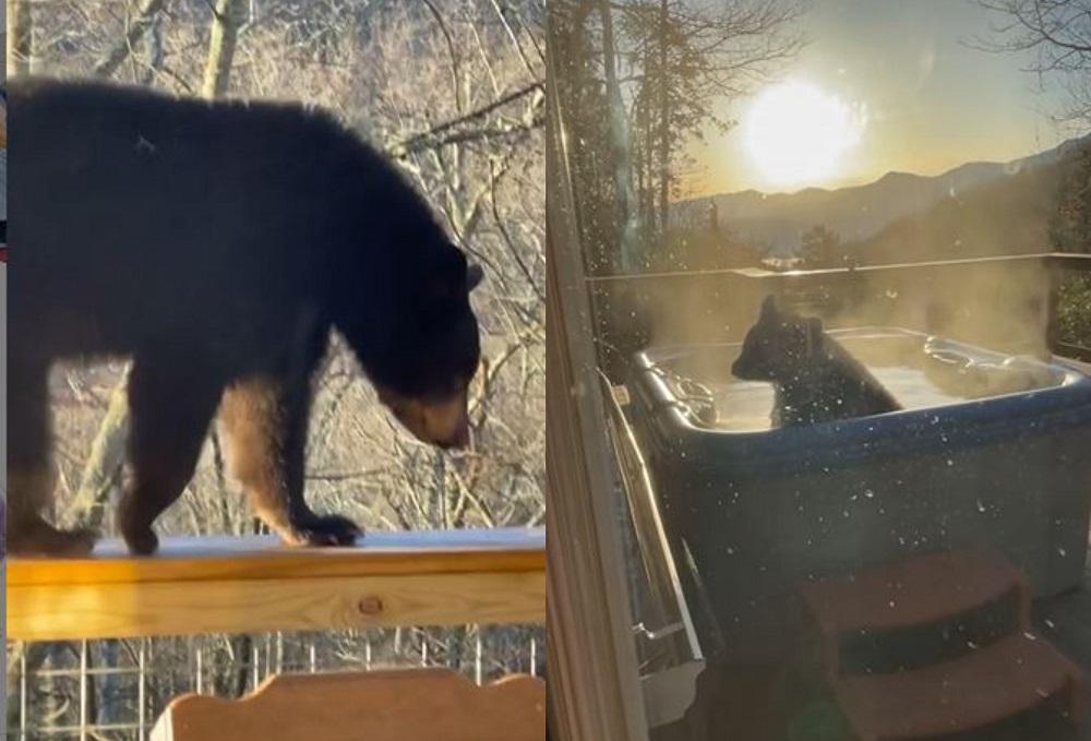 orso vasca idromassaggio