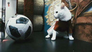 Euro 2020 gatto Achille
