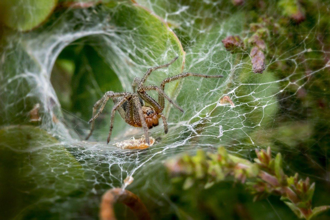 ragnatela gigante ragno e bruchi